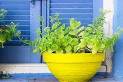 Grande vaso da fiori giallo Fotografia Stock