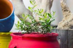 Grande vaso da fiori rosso Fotografia Stock Libera da Diritti