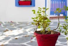 Grande vaso da fiori rosso Fotografia Stock