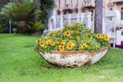 Grande vaso di argilla con le margarite gialle in Sanremo, Italia immagine stock