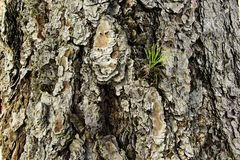 Grande vecchia struttura dell'albero con le foglie verdi Immagini Stock