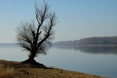 Grande vecchio albero della riva del fiume Fotografia Stock