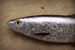 Grande vida-como arenques de pesca macios da atração foto de stock royalty free