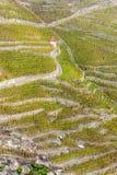 Grande vigna di cru di Cote Rotie Fotografia Stock
