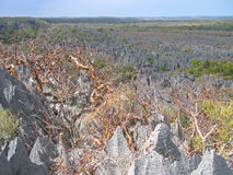 Grande vista na parte superior, Tsingy Fotografia de Stock
