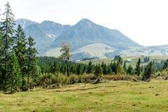 Grande vista nos cumes das montanhas altas Fotos de Stock Royalty Free