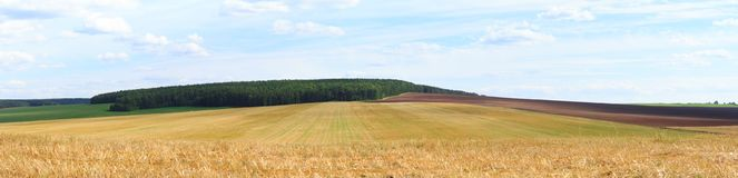 Grande vista sul giacimento di grano Fotografia Stock Libera da Diritti
