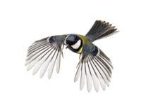 Grande voo do melharuco Imagem de Stock