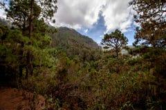 Grande vue au-dessus d'une forêt sur des formations de roche photos stock