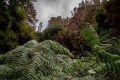 Grande vue au-dessus d'une fougère sur des formations de roche photographie stock libre de droits