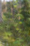 Grande Web de aranha Foto de Stock