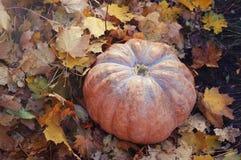 Grande zucca arancione Decorazione di Halloween & di ringraziamento con una zucca immagine stock