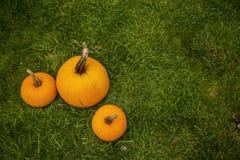 Grande zucca di autunno Fotografie Stock Libere da Diritti