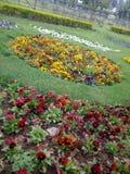 Granden in primavera Fotografie Stock