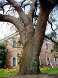 Grandes árvore e edifício fotografia de stock royalty free