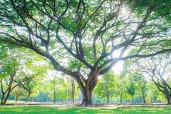 Grandes árvores Fotos de Stock Royalty Free