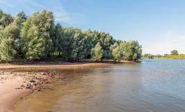 Grandes árvores de salgueiro no banco de um lago Fotografia de Stock