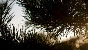 Grandes aiguilles impeccables au coucher du soleil banque de vidéos