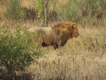 Grandes animais Imagens de Stock Royalty Free