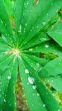 Grandes belles feuilles avec des gouttes de pluie Photographie stock