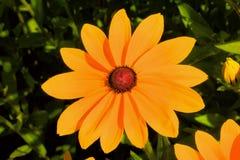 Grandes belles fleurs Photographie stock