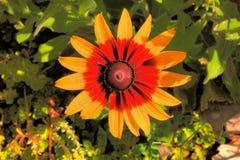 Grandes belles fleurs Image libre de droits