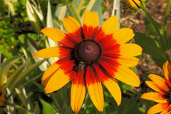 Grandes belles fleurs Images stock