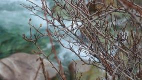 Grandes branches minces clips vidéos