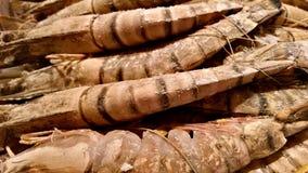 Grandes camarões do tigre Fotografia de Stock