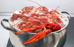Grandes caranguejos vermelhos Foto de Stock