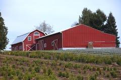 Grandes celeiros vermelhos. Fotografia de Stock