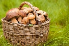 Grandes cogumelos brancos Fotografia de Stock Royalty Free