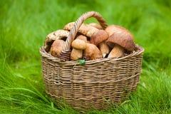 Grandes cogumelos brancos Fotos de Stock