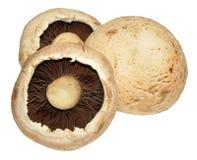 Grandes cogumelos lisos Imagens de Stock Royalty Free