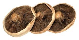 Grandes cogumelos lisos Foto de Stock