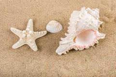 Grandes coquille et étoiles de mer de mer sur le sable de plage Photographie stock libre de droits