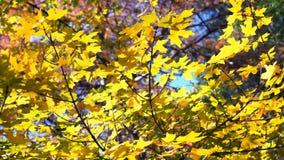 Grandes cores da queda Fotografia de Stock