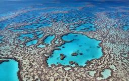 Grandes cores do recife de coral imagens de stock