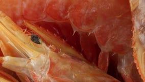 Grandes crevettes roses argentines banque de vidéos