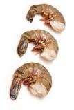 Grandes crevettes roses de tigre Image libre de droits