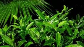 Grandes croissances vertes et feuilles photographie stock
