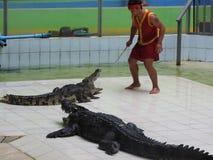 Grandes e crocodilos velhos em processo do treinamento no pavilhão, Tailândia imagem de stock