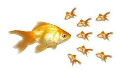 Grandes e Goldfishes pequenos (potência) Fotografia de Stock Royalty Free