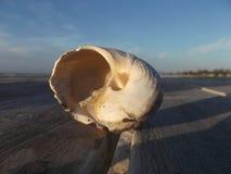 Grandes escudos na doca na frente da praia imagem de stock royalty free