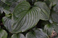 Grandes feuilles d'humidité photographie stock libre de droits
