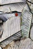 Grandes feuilles et peu de feuille - château Kennedy, Ecosse Image libre de droits