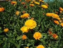 Grandes fleurs de nature Photo libre de droits
