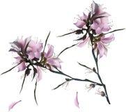 Grandes fleurs lilas avec les pétales en baisse Photo stock