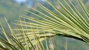 Grandes folhas da palma em Marmaris video estoque
