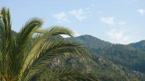 Grandes folhas da palma em Marmaris filme